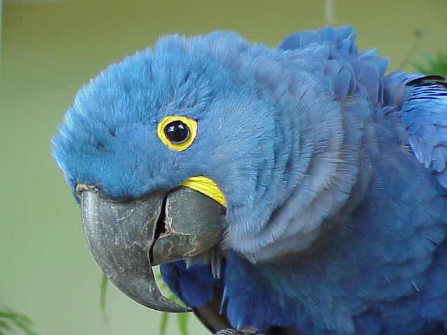 Macaw rescue inc